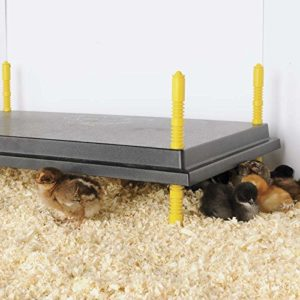 Outdoor Chick and Quail brooder